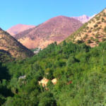 Bahá'u'lláh's Love