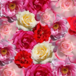 A Mountain of Roses: The Ridvan Festival